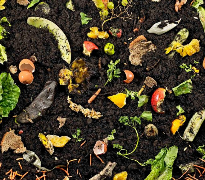 ¿Qué es el compost y para qué sirve?