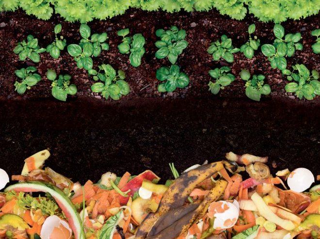 ¿Cómo hacer tu propio compost casero?