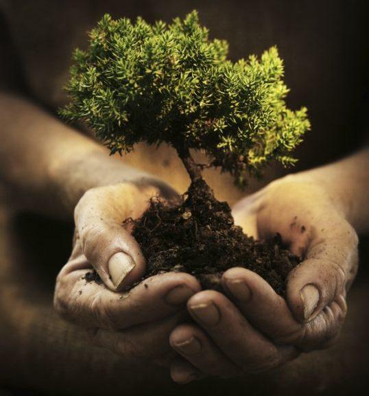 11 razones para plantar árboles