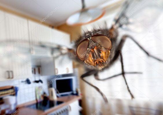 ¿Cómo ahuyentar las mosquitas de la cocina?