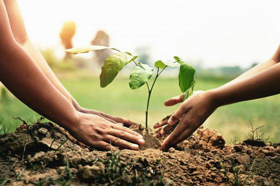 ¿Cómo utilizar la tierra del compost?